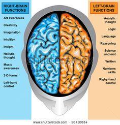 Left/ Right Brain