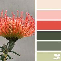 nature-colors-palette_7