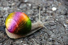 Social Rainbow Snail
