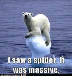 Funny Animal Pictures with Captions | funny-animal-captions-animal-capshunz-is-it-gone.jpg