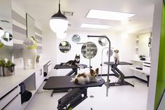 Pooch Pampering: Beverly Hills has Gone to the Dogs Dog Grooming Shop, Dog Grooming Salons, Poodle Grooming, Dog Grooming Business, Dog Spa, Spa Interior, Pet Hotel, Dog Salon, Decoration