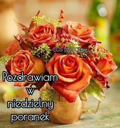 Rose, Flowers, Plants, Pictures, Blog, Good Morning Funny, Funny Pics, Polish, Photos