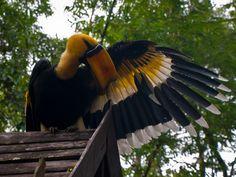 Great Indian Hornbill  http://mavanwey.files.wordpress.com/2010/09/flora-and-fauna-18.jpg