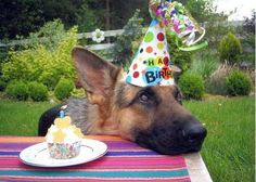 If I could have a German Shepherd, I would never ever ever humiliate him like this. But, I'd still throw him a kickass bday party.