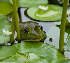 Frog image by Doug Delaney