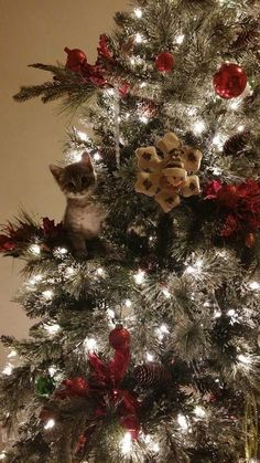 Merry Christmas to you all! Cat Christmas Tree, Christmas Animals, Little Christmas, Winter Christmas, All Things Christmas, Christmas Time, Merry Christmas, Christmas Ornament, Kittens Cutest
