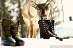 Rudi is testing our new fashion hightlight - Lundhags Boots.