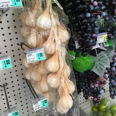 Either the craft supply store has done something in humane or this product is meant to be garlic bulbs.