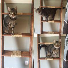 Ladder Cadder Blanket Ladder Decorative Ladder by LATEwoodworking