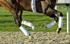 Researchers found that none of the evaluated bones showed significant shape changes after training and racing.