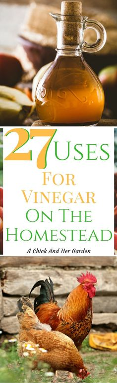 It's amazing how many uses there are for vinegar on the homestead! Check out how many things we can get rid of on our shopping lists!