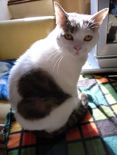 Cat wearing his heart on his fur!