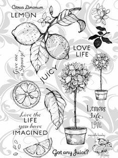 Flourishes Stamp Set, Lemons Life Love, what a fun summer set.  Love that lemon tree!