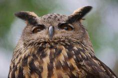 Owl. | by LisaDiazPhotos