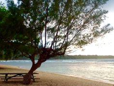 Anahola Beach Park Photo:  Laule'a Kaua'i