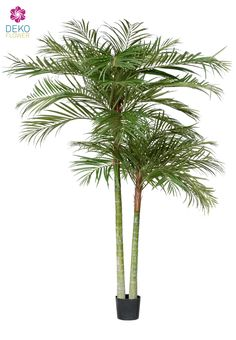 Künstliche Areca Palme Deluxe, 210cm