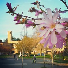 Campus is wearing a touch of pink these days.