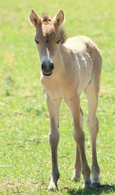 Baby horse foal  #horse #horses #foal #babyhorse #babyhorses   http://www.islandcowgirl.com/