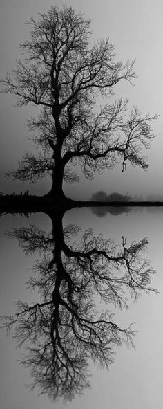 reflection of black & twisted