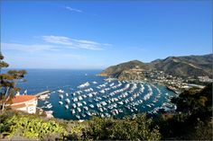 Catalina Island ~ Might just have to go here in May!