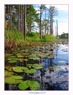 Florida's Emerald Coast by ~cravingfordesign on deviantART.  Taken at Red Fish Lake near Seaside, Florida.