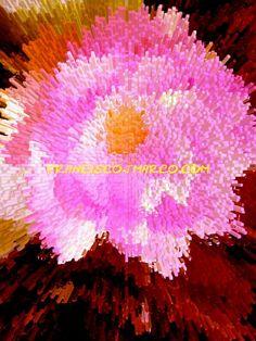 Titulo: Lotus rosado.