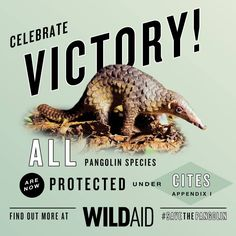 GOOD NEWS: At the CITES conference in South Africa, the world has approved proposals to protect all eight species of #pangolins by barring international trade of pangolin scales/meat!