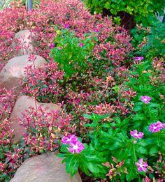 Jardín con hojas , piedras y flores