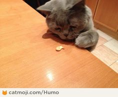 I'd sell my soul for the cracker... Душу продам за крекер 'рыбка'... By Humo