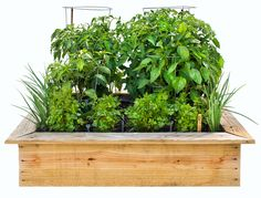 Planting Plan for Homemade 4 x 4-foot Salsa Garden - Bonnie Plants