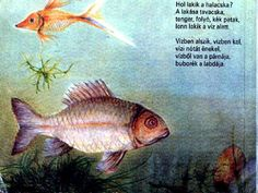 Kindergarten, Fish, Pets, Hungary, Animals, School, Animales, Animaux, Pisces