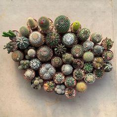 Houseplants That Filter the Air We Breathe Cactus Collection Kaewcactus Cactus For Sale, Cactus Gifts, Succulent Planter Diy, Crochet Cactus, Colorful Succulents, Cactus Print, Plant Nursery, Little Plants, Garden Gifts
