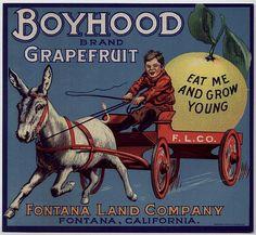 F.L.Co. Label: Boyhood Brand Grapefruit. Fontana Land Company Fontan, California | Flickr - Photo Sharing! peagreengirl