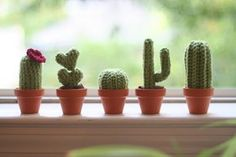 I'm having tons of fun crocheting these little cacti. They come together in an hour or two, so it's a great project for an evening when you want to have something to show at the end of it! It's als...