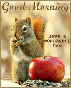 Every time I see a squirrel, I have a wonderful day ♥
