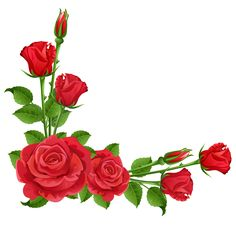 Red Roses Transparent PNG Clipart