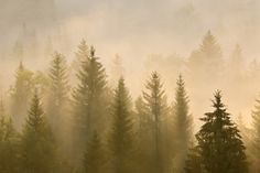 Morning Mist in Bavaria