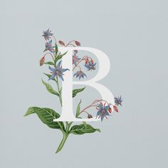 Exploring the fascinating range of edible flowers, this illustrated alphabet com. Alphabet, Illustration, Illuminated Letters, Edible Flowers, Letter Art, Letters And Numbers, Gouache, Hand Lettering, Graphic Design Inspiration