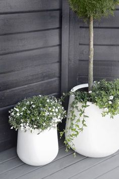 minimal white flower pots large big for flowers and trees , black and white porch garden. white flower pots large big for flowers and trees , black and white porch garden balcony white flowers Scandi minimal design Outdoor Flowers, Outdoor Planters, Outdoor Gardens, Outdoor Potted Plants, Fence Plants, Pot Plants, Potted Trees, Porch Garden, Garden Pots