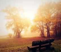 Inspiring picture automn, autumn, bench, breath, emotive, fall. Resolution: 500x499 px. Find the picture to your taste!