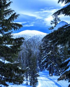 Scenic Snow Covered Mountain Looking Through The Trees at a Blue Sky fine art photography print     http://fineartamerica.com/featured/scenic-snow-covered-mountain-looking-through-the-trees-at-a-blue-sky-jerry-cowart.html?newartwork=true