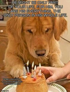 Love this. Dogs are family animals, they should be part of your life and family, not something you own.