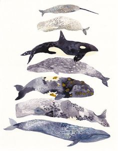 This is an archival print of my original watercolor painting. Portrait orientation  7 whales stacked. In the scroll menu please choose from the two