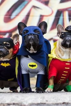 Batman and Robin costumes - 28 Ways to Dress Up Your Dog This Halloween via @PureWow