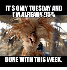 Lol Happy Tuesday everyone. Lol Happy Tuesday everyone. Emily's pins Yeppers! Lol Happy Tuesday everyone. Tuesday Quotes Funny, Tuesday Meme, Wednesday Humor, Friday Humor, Funny Weekend Quotes, Quotes Friday, Weekend Humor, Wednesday Morning, Tuesday Wednesday