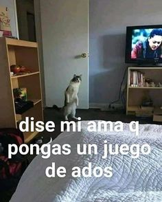 Read from the story Shitposting sabor a takis fuego by Cry-Babx (🤡) with reads. Memes Estúpidos, Cute Memes, Best Memes, Funny Jokes, Response Memes, Funny Spanish Memes, All Meme, Pinterest Memes, Book Aesthetic