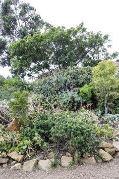 'n Waterwys lushof van vetplante en fynbos Stepping Stones, Water, Outdoor Decor, Plants, Gripe Water, Stair Risers, Plant, Planets