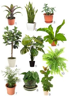 Outdoor tropical plants for small garden design with dark for Garden law trees