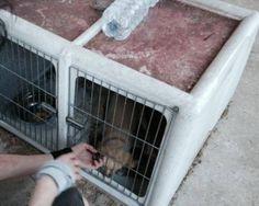 Cucciolo che viveva in una gabbietta cerca adozione | Guardie Ambientali Onlus Regione Lombardia - Sito Ufficiale