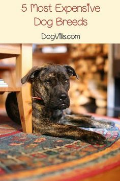 5 Tips to Housebreaking Your Puppy When You Work Full Time